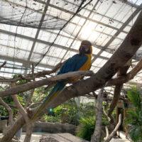 カラフルな鳥ルリコンゴウインコ 1