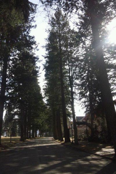 背の高い木々たち