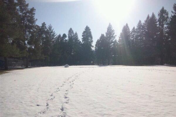 雪 誰かの足跡