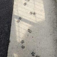 にゃんの足跡