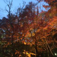 須磨離宮公園 紅葉 2