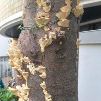 木のきのこ