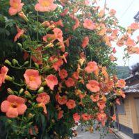 薄紅色の花