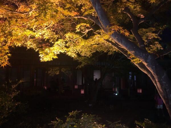 須磨離宮公園 紅葉 6