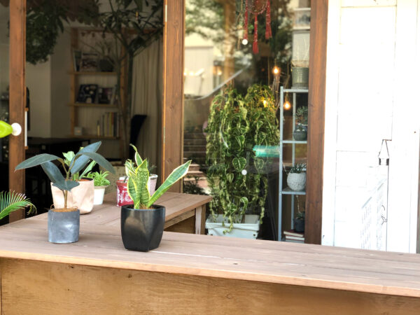カウンターの植物 5