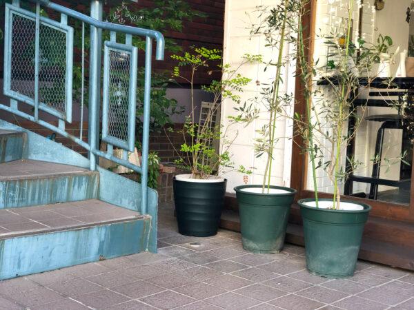 植物と階段