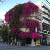 花に食べられた建物