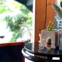 カウンターの植物 4
