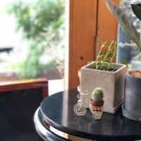 カウンターの植物 3