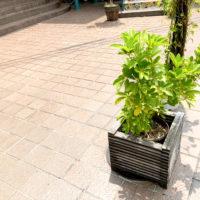 道端の観葉植物 1