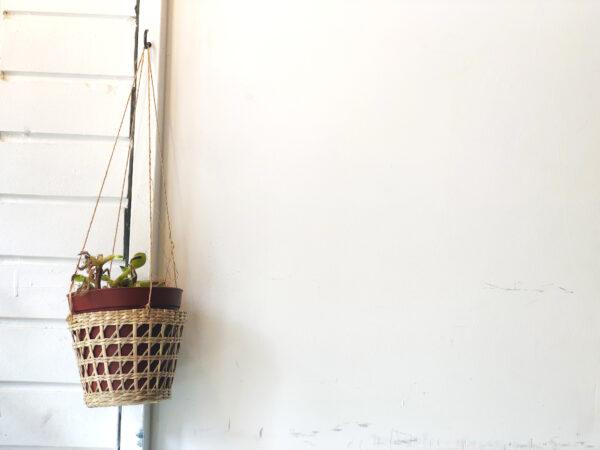 植物と壁 1