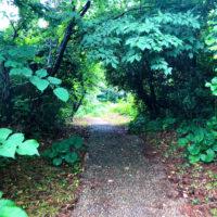 緑のトンネル 2
