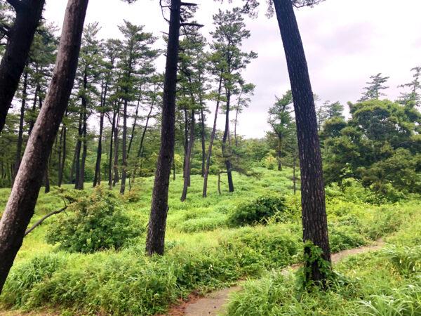 森の中の道 3