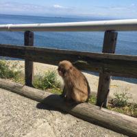 淡路島の猿 3