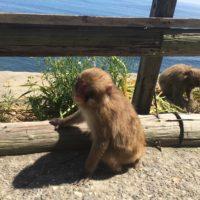 淡路島の猿 2