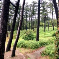 森の中の道 2