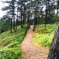 森の中の道 4
