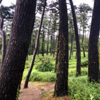 森の中の道 1