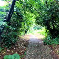 緑のトンネル 3