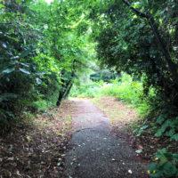 緑のトンネル 4