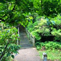 森の中の橋
