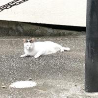 北野猫 4