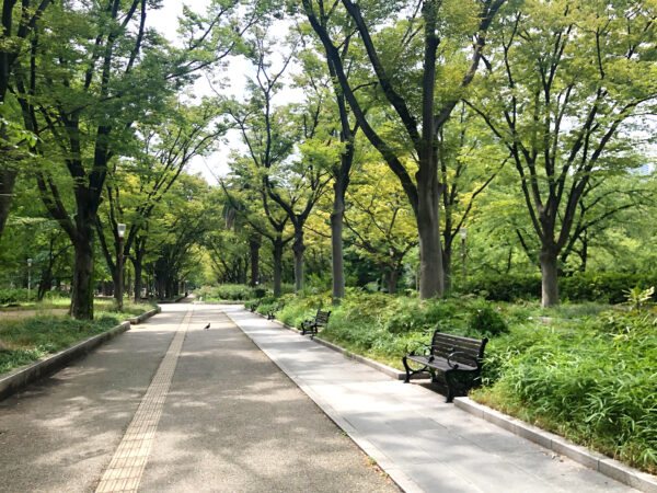 公園のベンチ 4