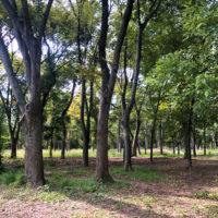 公園の森林 2