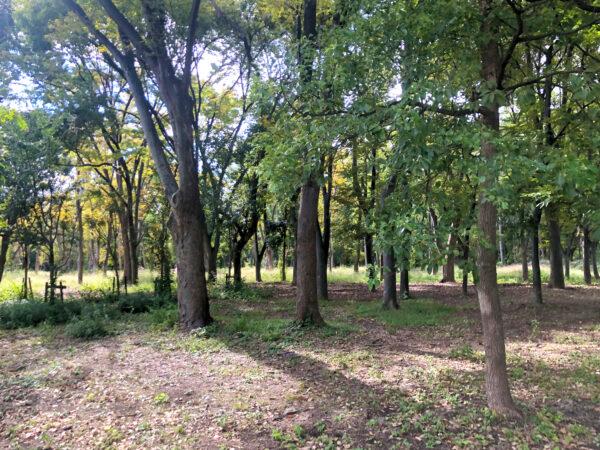 公園の森林 1