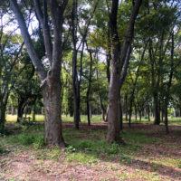 公園の森林 3