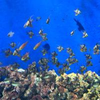 熱帯魚 2