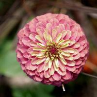 神戸北野 花 1