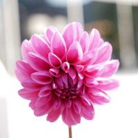 神戸北野 花 3