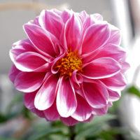 神戸北野 花 2