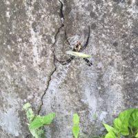 蜘蛛 捕食