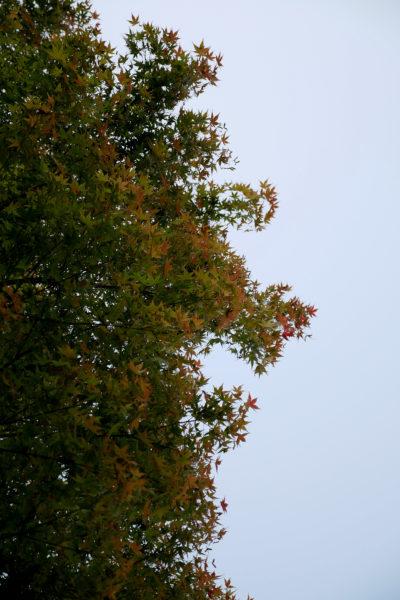秋 紅葉の始まり