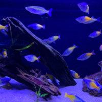 熱帯魚 1