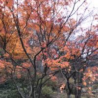 六甲山の紅葉 4