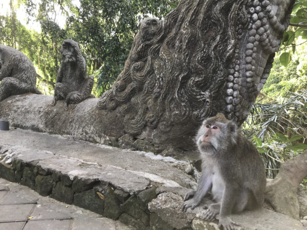 モンキーフォレストにいた猿