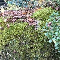 岩に茂る苔