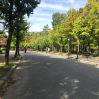 公園の森林 4