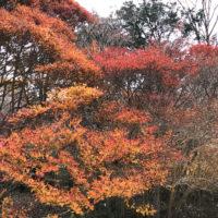 六甲山の紅葉 1