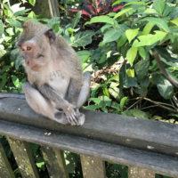 バリの猿 1