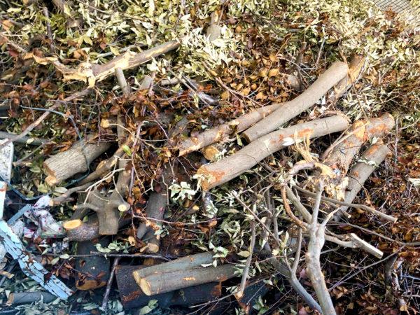 木の廃材 1