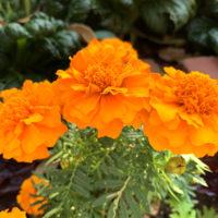 オレンジの花 1