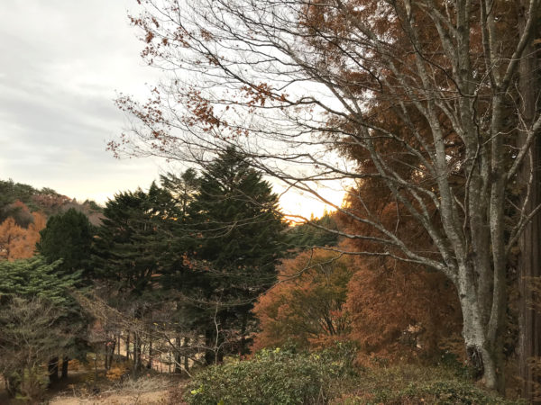 六甲山の紅葉 2