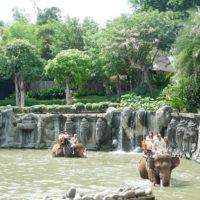 エレファント・ライド(象乗り体験) 2
