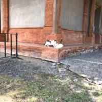 バリ猫 2