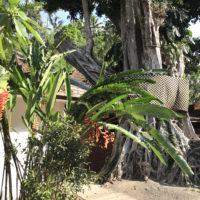 南国っぽい植物