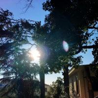 木漏れ日 1